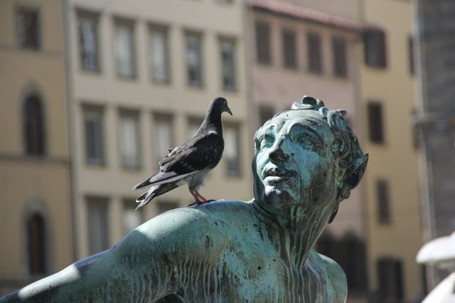 Bird Control Sydney & Bird Removal Sydney