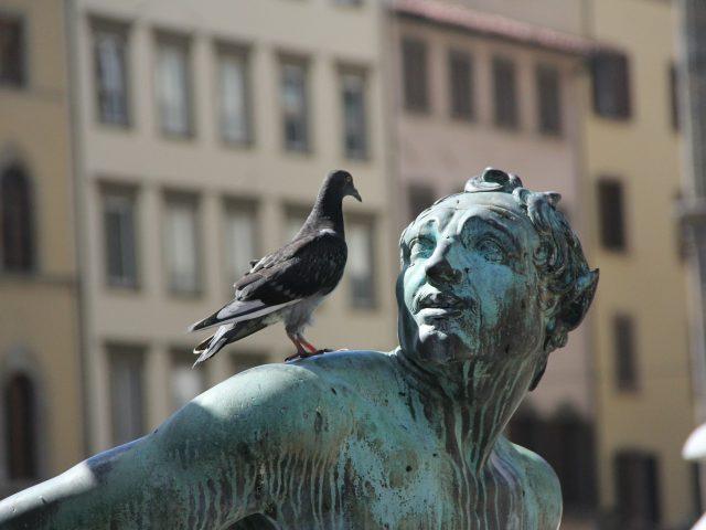 Bird Control Sydney