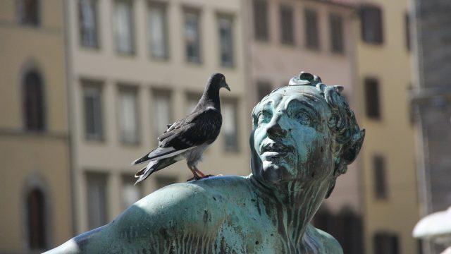 Bird Control Sydney NSW