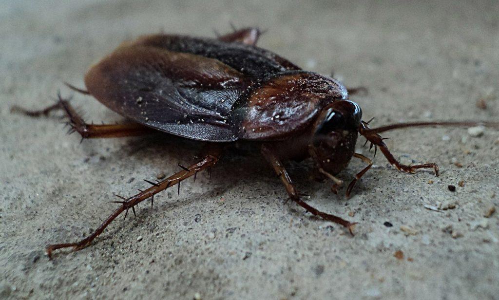 cockroach control sydney