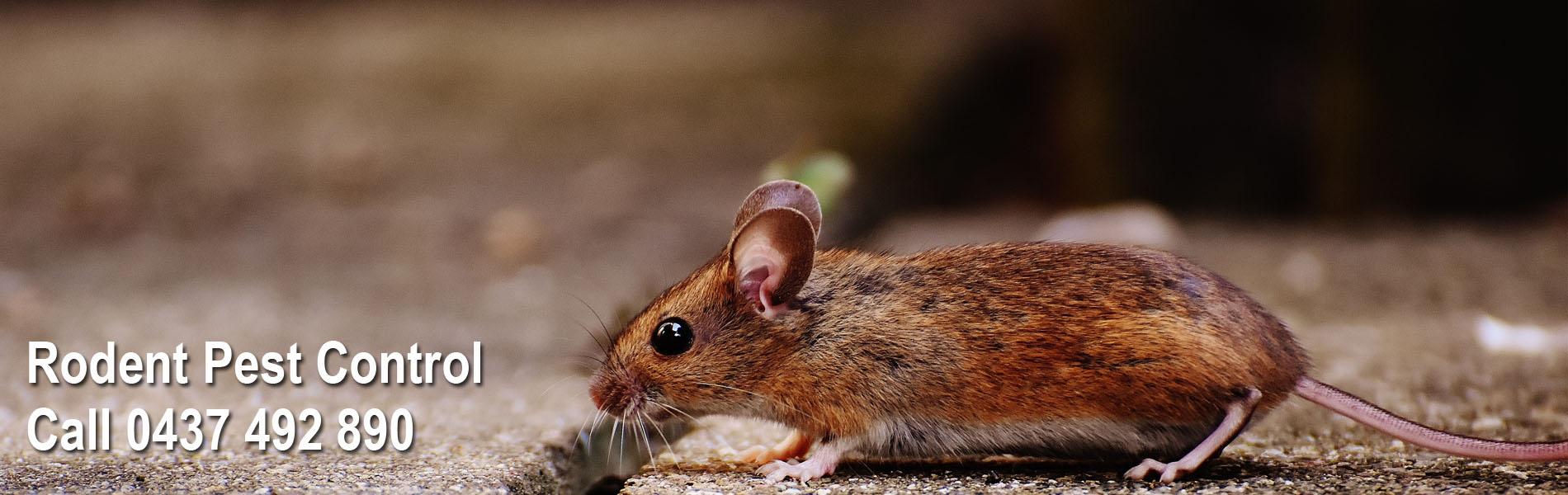 rodent pest control sydney